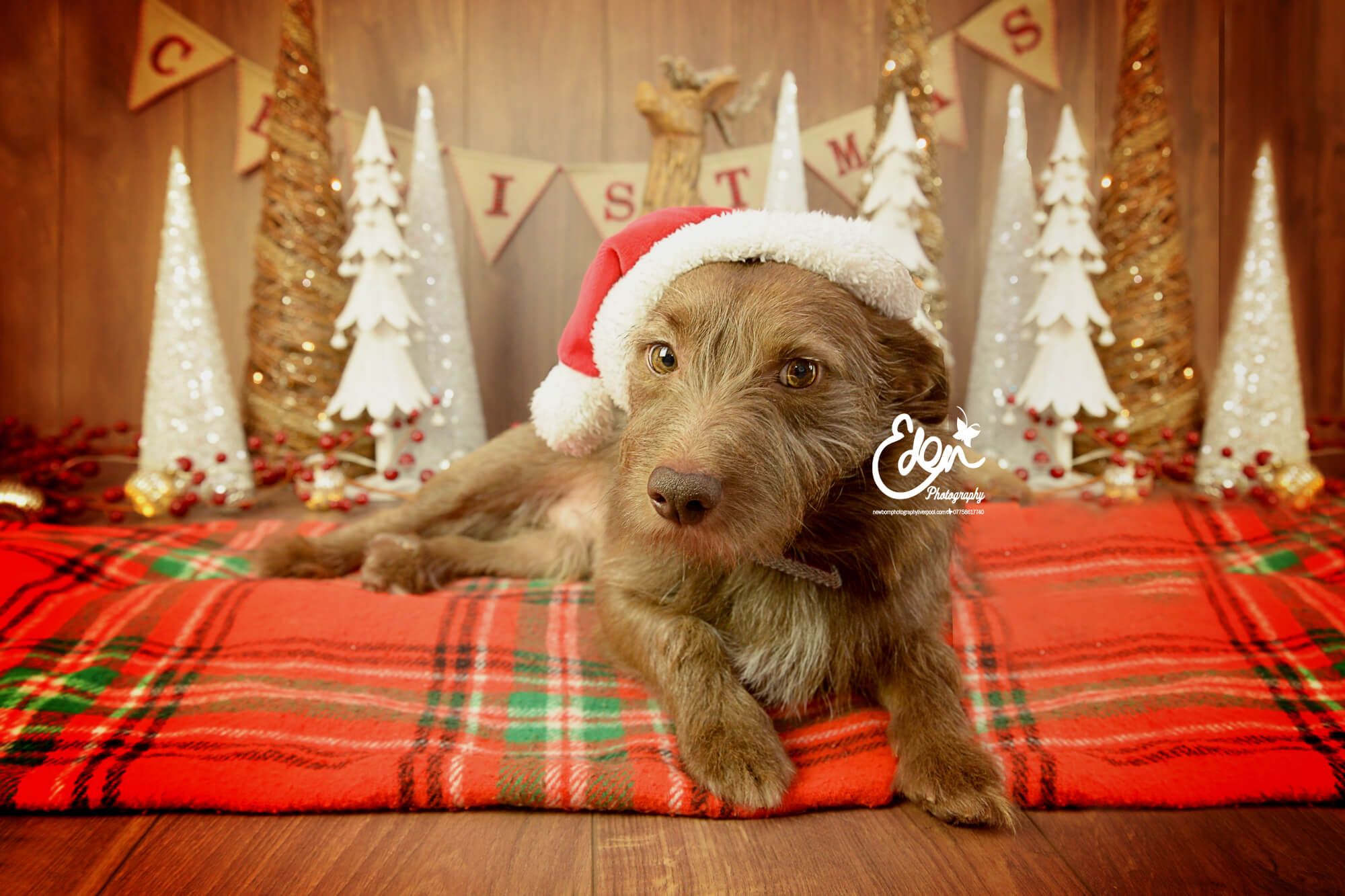 Pet Christmas Photo Shoot Liverpool